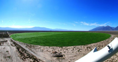 Crop Corp Nevada Hemp Farm