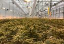 WeedMD Strathroy Facility Tour