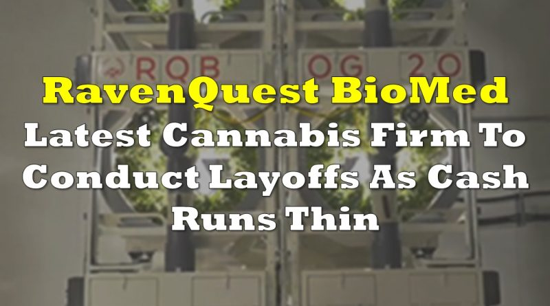 Ravenquest Latest Cannabis Firm To Conduct Layoffs As Cash Runs Thin