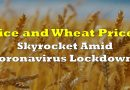 Rice and Wheat Prices Skyrocket Amid Coronavirus Lockdowns