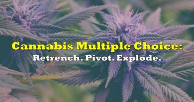 Cannabis Multiple Choice: Retrench. Pivot. Explode.