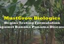 MustGrow Begins Testing Formulation Against Banana Panama Disease